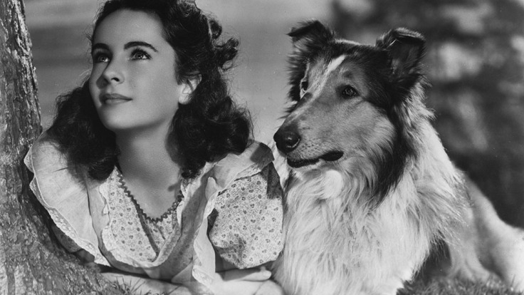 Lassie - Courage Of