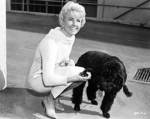 doris-day-dog